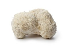 Cauliflower mushroom Stock Photo
