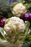 Cauliflower and other cabbages Royalty Free Stock Photo