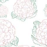 Cauliflower pattern Royalty Free Stock Photography