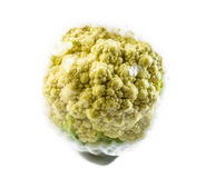 Cauliflower with plastic Stock Photos