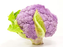 Cauliflower. Purple cauliflower plant on white Stock Image