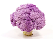 Cauliflower. Purple cauliflower plant on white Royalty Free Stock Photos