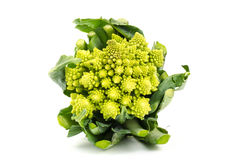 Cauliflower Romanesco Stock Photo