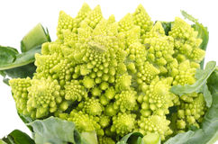 Cauliflower Romanesco Royalty Free Stock Images