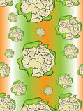 Cauliflower seamless pattern Royalty Free Stock Image
