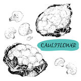 Cauliflower Royalty Free Stock Photography