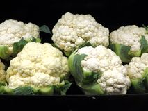 Cauliflower. Several heads of freshly picked cauliflower stock images