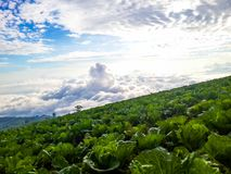 Cauliflower Sky View with Fog royalty free stock photos