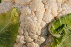 Cauliflower. Texture of fresh cauliflower for a tasty salad Stock Photography