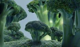 Cauliflower tree Royalty Free Stock Image