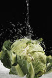 Cauliflower under jet of water Royalty Free Stock Images