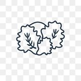 Cauliflower vector icon isolated on transparent background, line stock illustration