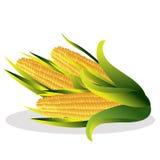 Cauliflower vector illustration. Royalty Free Stock Image