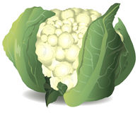 Cauliflower. Vector illustration. Royalty Free Stock Photos