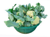 Cauliflower in the vegetable basket Royalty Free Stock Photo