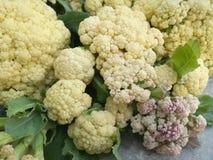 Cauliflower in vegetable garden Royalty Free Stock Photography