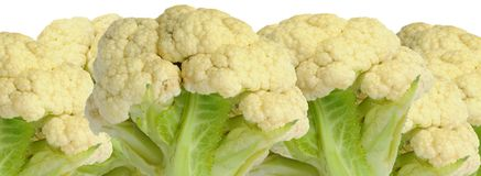 Cauliflower on White Background Royalty Free Stock Image