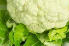 Cauliflower. The white cauliflower close-up picture stock photo