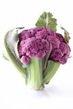 cauliflowers пурпуровые Стоковые Фото