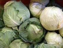 cauliflowers Стоковое Изображение