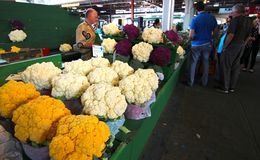 Cauliflowers of all colors Stock Images