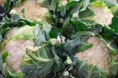 Cauliflowers in a market. Royalty Free Stock Images