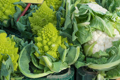 Cauliflowers Royalty Free Stock Photos