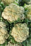 Cauliflowers Stock Photos