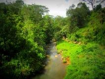 Causa del agua de Leat dentro de la selva Fotografía de archivo libre de regalías
