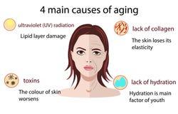 Causas del envejecimiento, ejemplo del vector aislado en el fondo blanco libre illustration