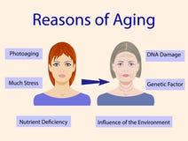 Causas del envejecimiento, ejemplo del vector con dos caras ilustración del vector
