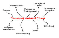 Causes of Animal Stress Royalty Free Stock Photo