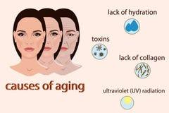 Causes du vieillissement, de l'illustration de vecteur avec deux visages et des petites photos Photographie stock libre de droits