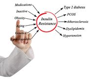 Causes of Insulin Resistance. Woman presenting Causes of Insulin Resistance Royalty Free Stock Images