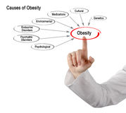 Causes of Obesity. Presenting Diagram of Causes of Obesity Stock Image