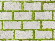 Causeway. Modern brick causeway. Gray square bricks. Green Grass suture Royalty Free Stock Image