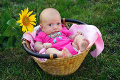 Causial baby in straw basket with sunflower Royalty Free Stock Photography