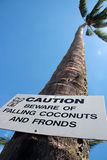 Caution. Beware of falling coconuts and fronds Stock Photos
