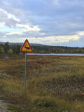 Caution Elk royalty free stock photo