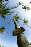 Caution Falling Coconuts. 'Caution Falling Coconuts' sign on palm tree royalty free stock photography