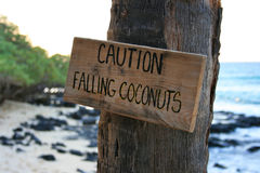 Caution falling coconuts. A warning sign caution falling coconuts on a beach at the hawaiian island of Big Island Stock Photos