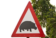 Caution: Hippos Royalty Free Stock Photo