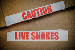 Caution Live Snakes Royalty Free Stock Images