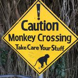 Caution monkey crossing Royalty Free Stock Images