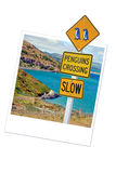 Caution penguins road sign in New Zealand Stock Photo