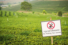 Caution Sign at Choui Fong Tea Plantation ,Chiangrai Thailand Stock Photos