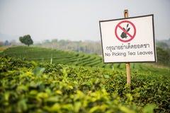 Caution Sign at Choui Fong Tea Plantation ,Chiangrai Thailand Stock Photo