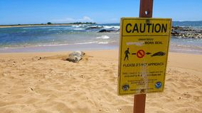 Caution sign with monk seal on beach stock photo