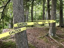 Caution tape on trees. Yellow caution tape wrapped around tree trunks in a forest stock photos