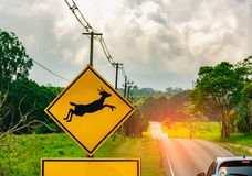 Caution ! wildlife crossing sign beside asphalt road near small hill and green grass field. Car of the tourist driving with caution during travel Royalty Free Stock Images